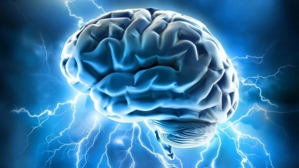 Das Gehirn (Foto: Alan Ajifo / aboutmodafinil.com)